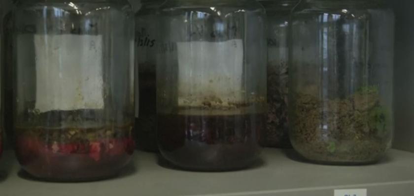 Destilado de muerte