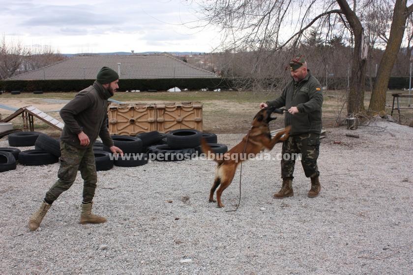 Centro Militar de Cría Caballar