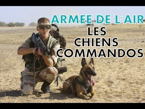 Los perros comando del Ejército