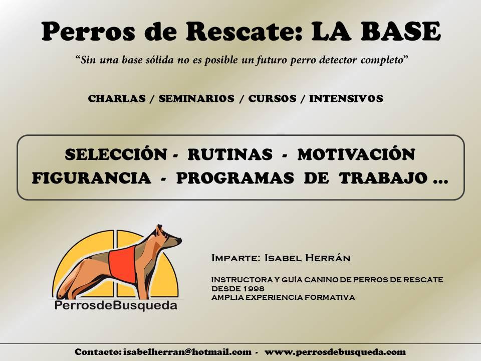 formación perros de rescate: la base