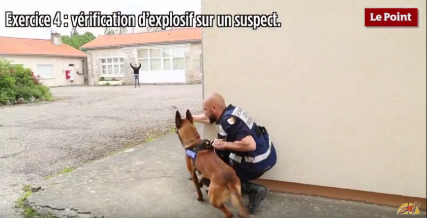 Perros detectores para garantizar la seguridad en los estadios