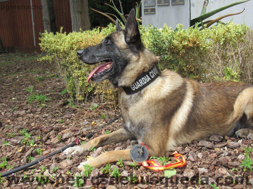 XIII Carrera de Guías Caninos