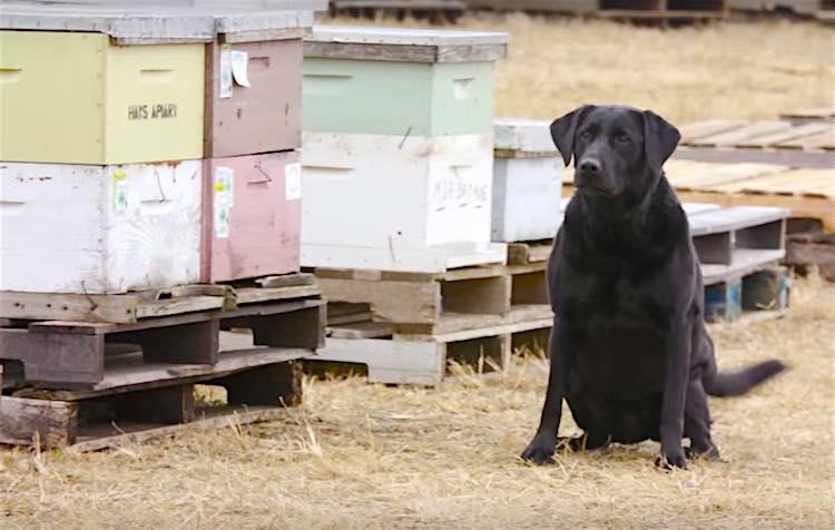 colonias enteras de abejas