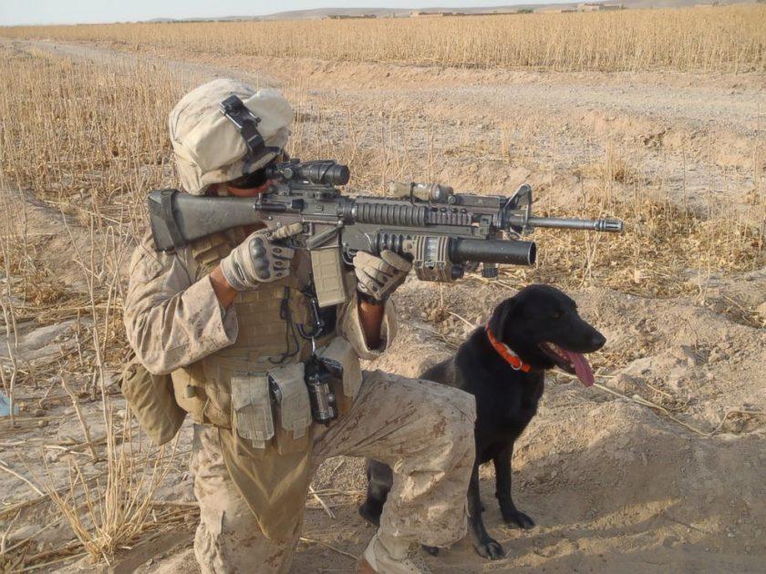 cuatro héroes caninos