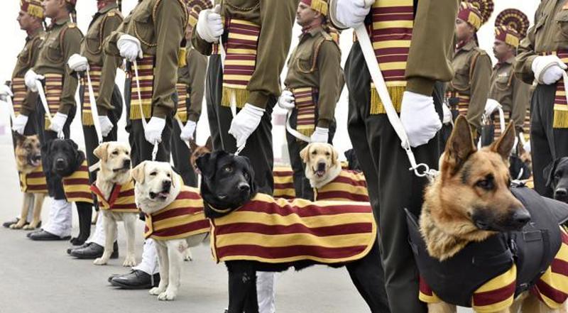 División Canina del Ejército Indio