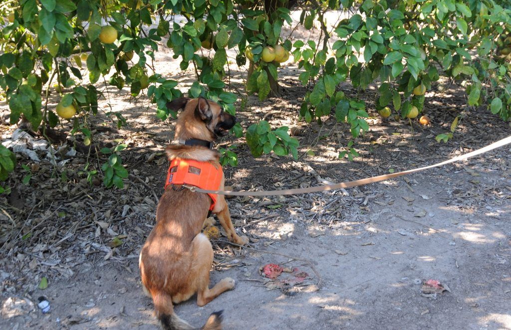 naranjos de Florida