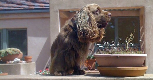 Premio a la Excelencia Canina