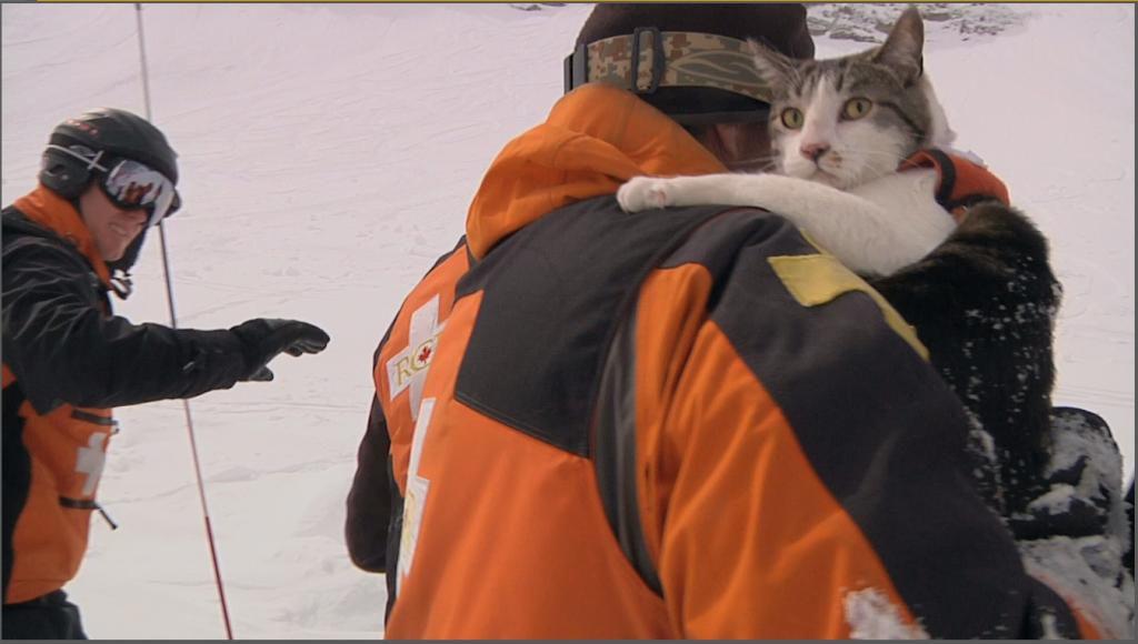 gatos de rescate