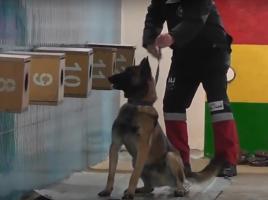 detectores en Kosovo