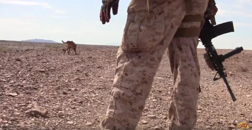 perros militares vuelven