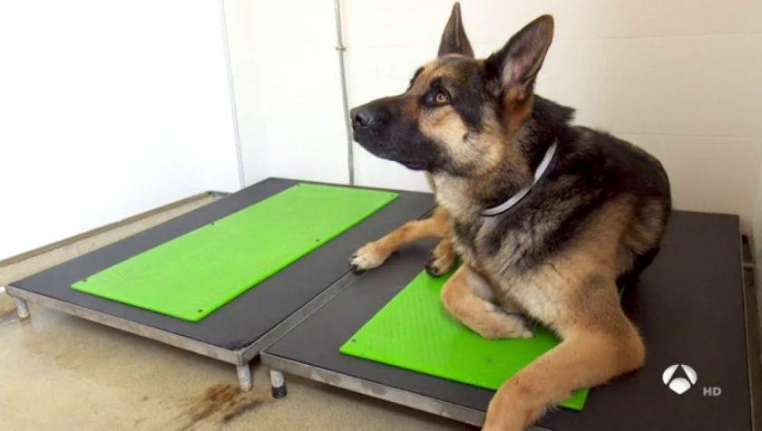 perros de trabajo no sufren