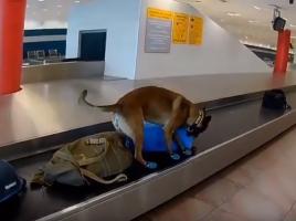 detector de drogas en el aeropuerto