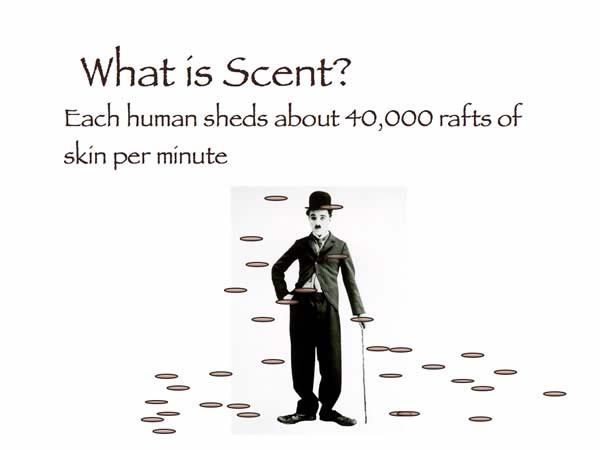 movimientos del olor