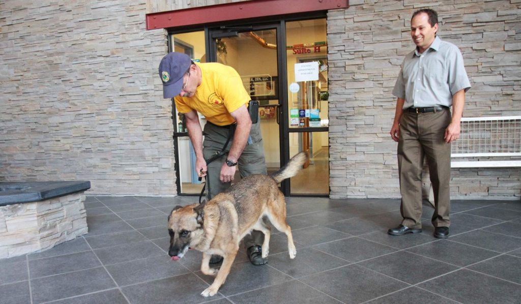 eficacia de los perros detectores