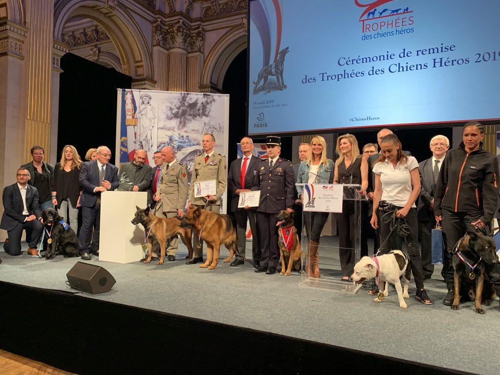 Perros Héroes 2019
