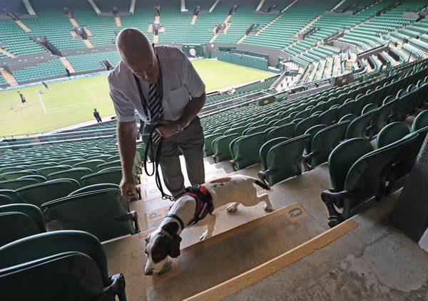 Wimbledon perros detectores