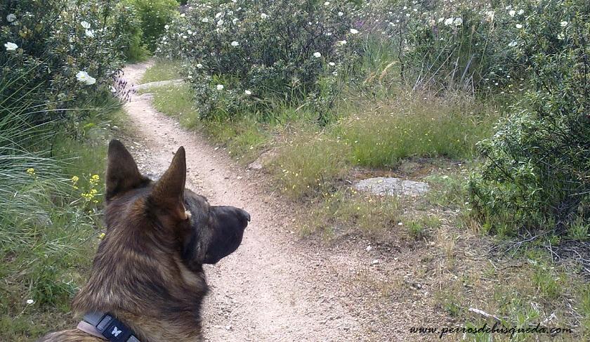 perro de búsqueda de personas