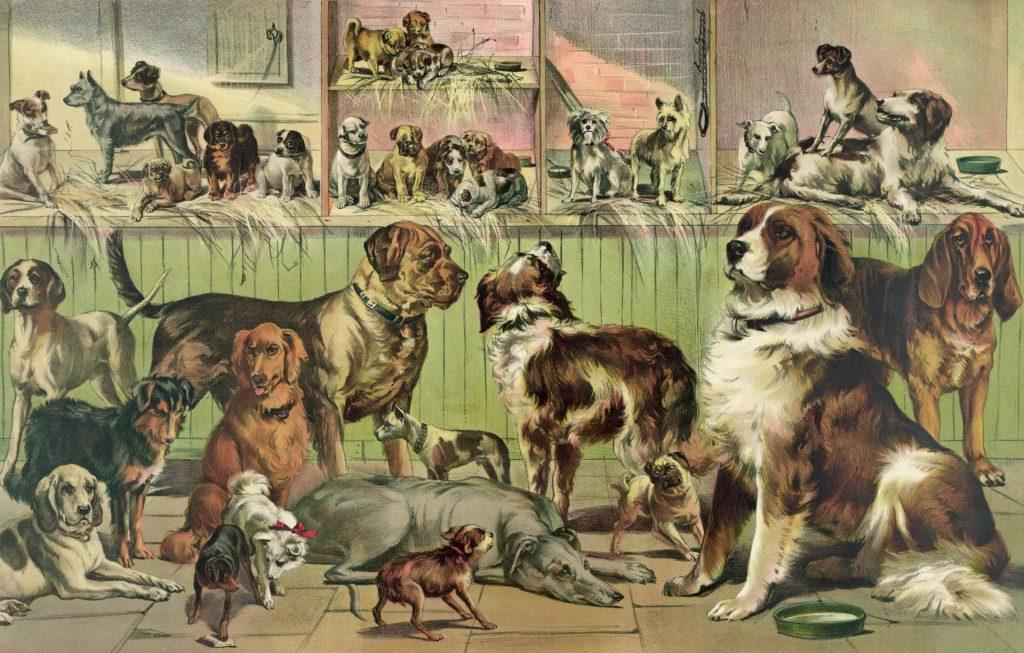 selección del perro