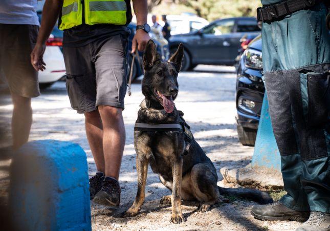 Xena, un perro de drogas
