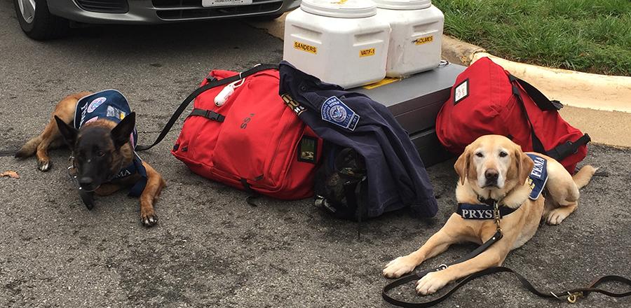 Equipos caninos de rescate