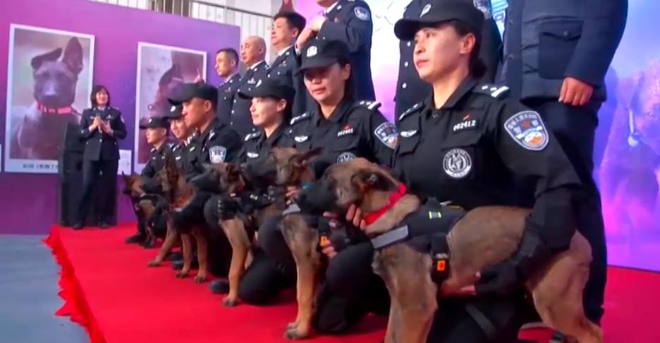 agentes caninos clonados en China