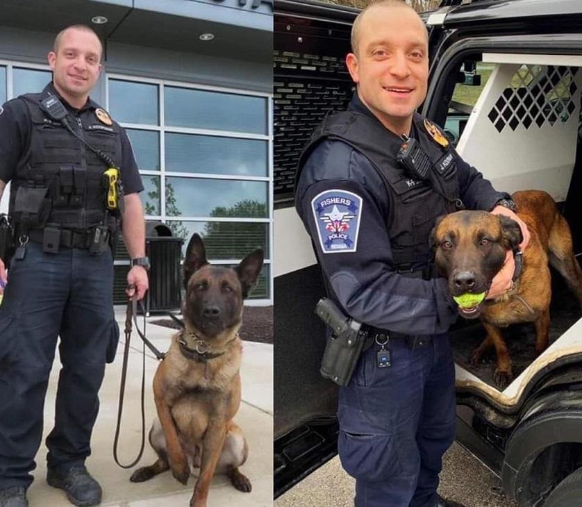 Harlej perro policía