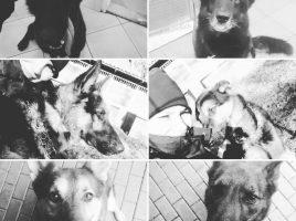 Seis perros policía mueren en trágico accidente