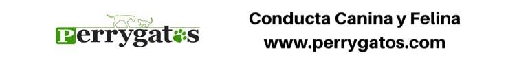crisis del coronavirus-banner