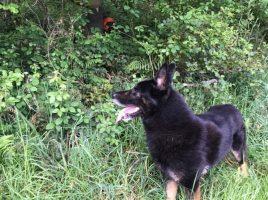 Un perro localiza a un desaparecido en Lancara