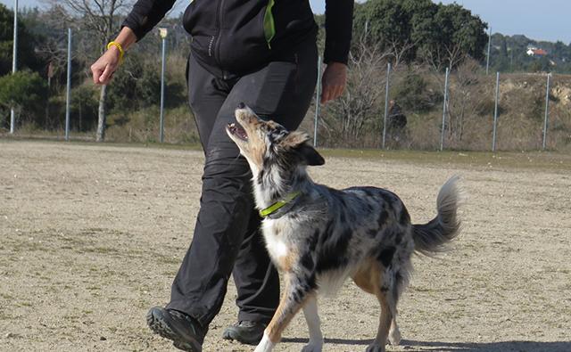 obediencia en los perros