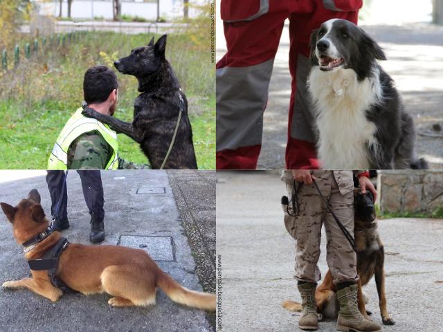 escuela para guías caninos
