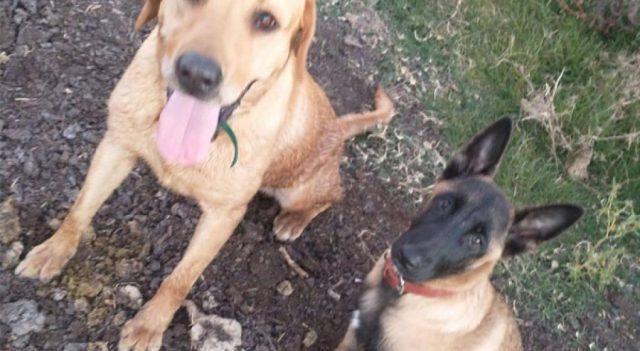 mueren dos perros de rescate un un incendio