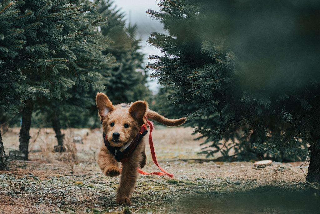 perros para buscar perros