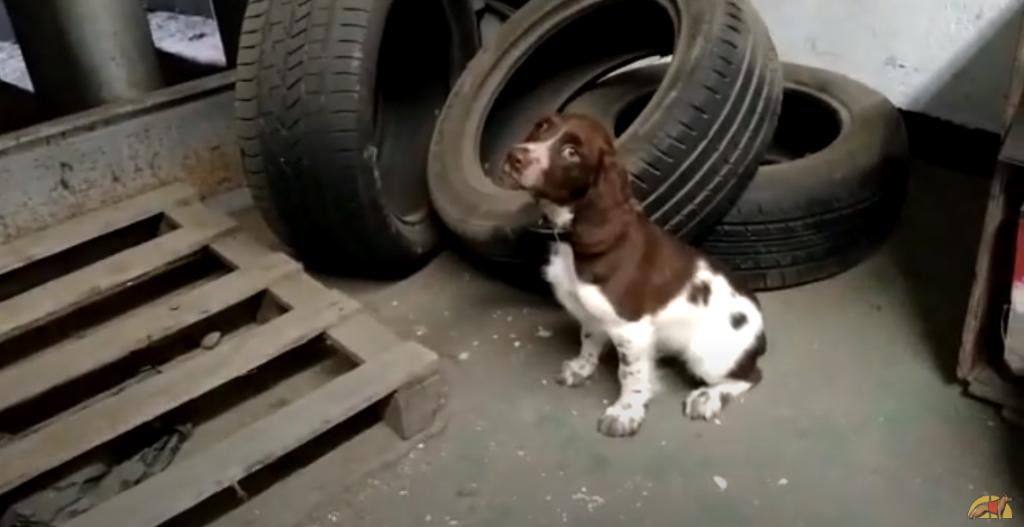 Koke, futuro perro detector de acelerantes