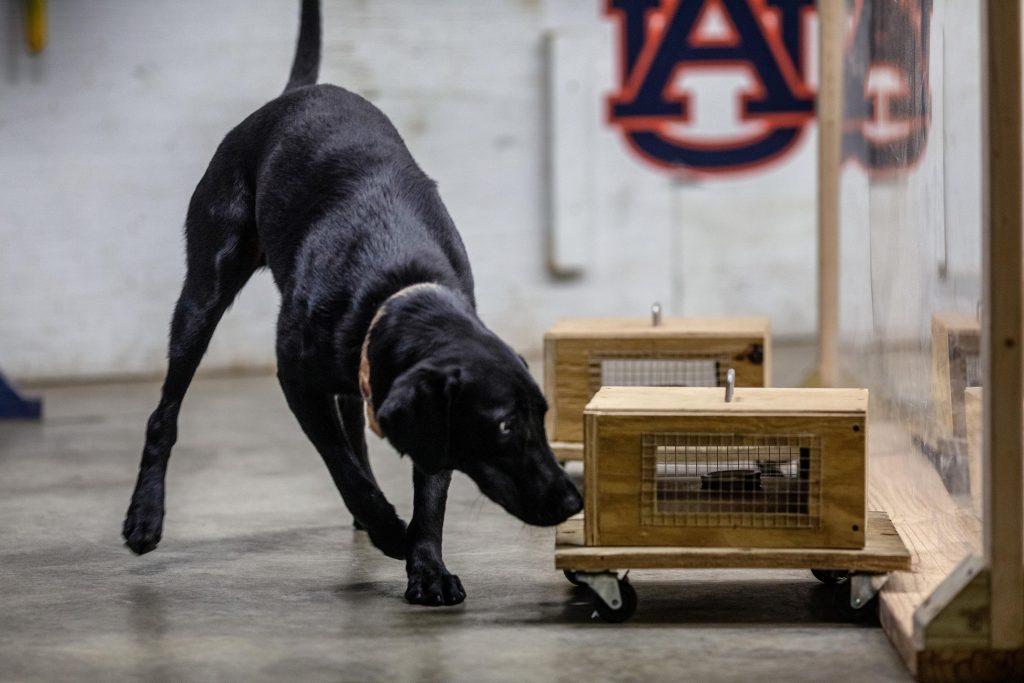 Un modo más seguro para entrenar perros detectores