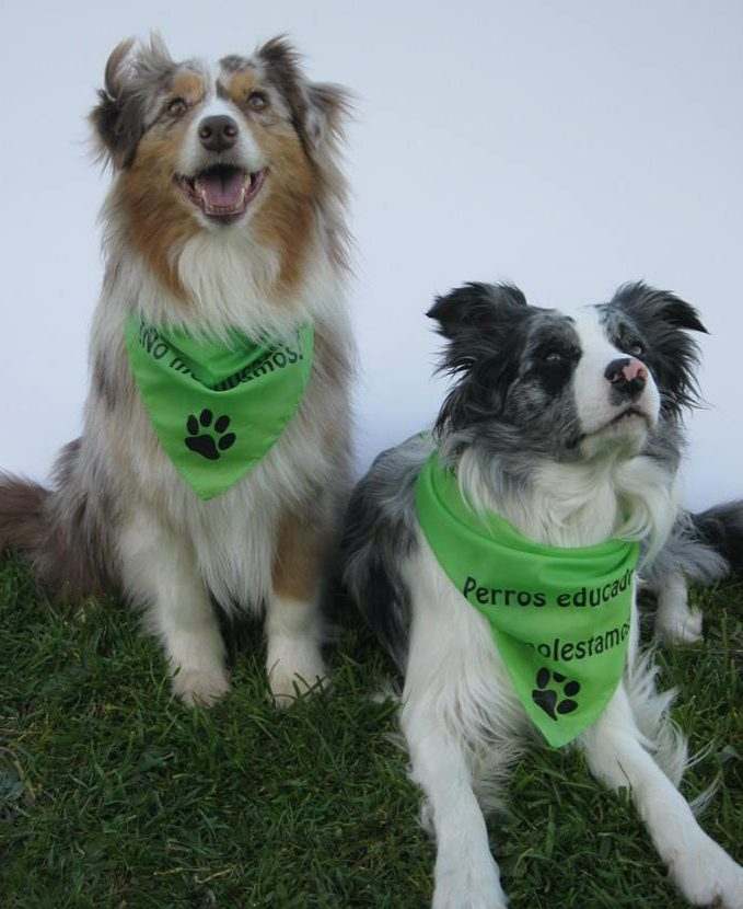 Flashmob perros