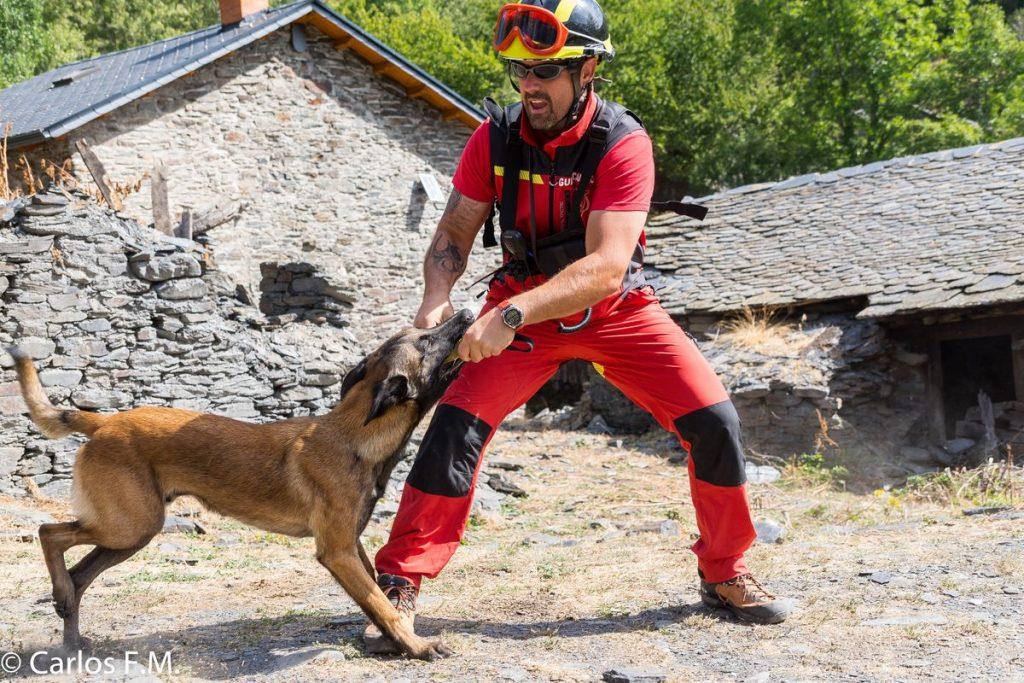 perro dual en catástrofes