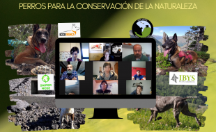 perros para la conservación