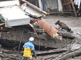 Perros de búsqueda en el deslizamiento de tierra en Atami