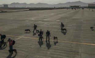 Equipos caninos evacuados de Afganistán